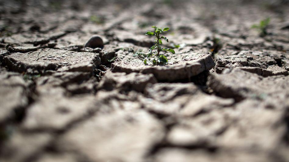 Dürrer Boden: Besonders knapp sind die Wasservorräte in Regionen im Nahen Osten und Nordafrika