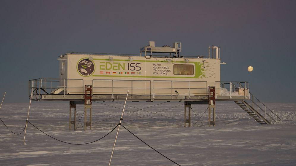 Pflanzen-Experiment in Antarktis: Gurken satt