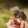 Fünf kuriose Techniken zur Rettung bedrohter Tiere