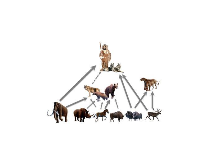 Vereinfachte Darstellung der Jäger-Beute-Beziehungen vor 30.000 Jahren