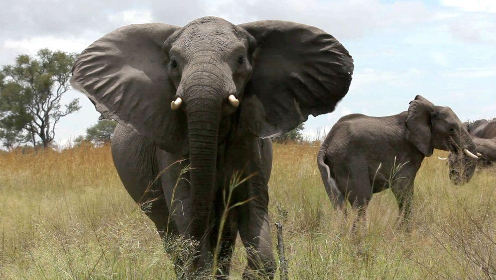 Größtes Naturschutzgebiet Afrikas: Grenzenlose Safaris