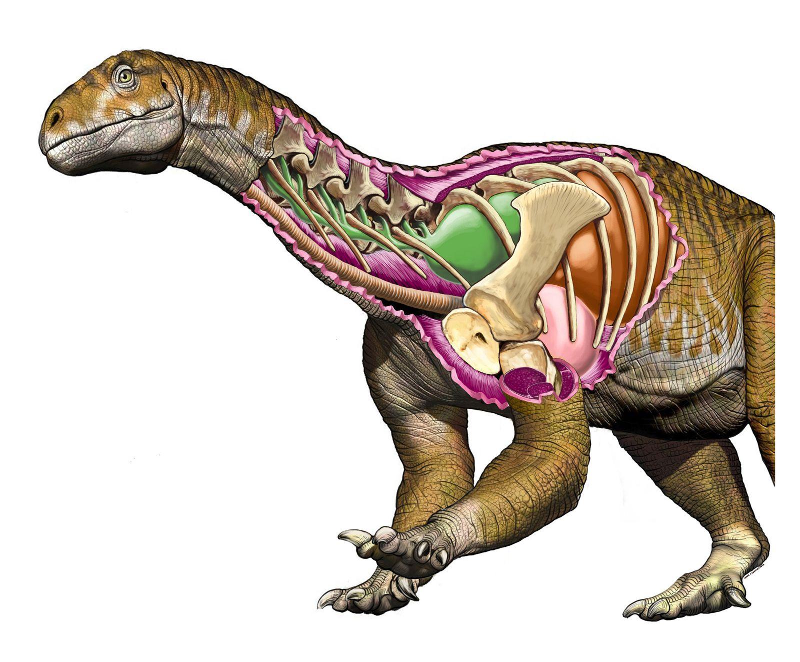 EINMALIGE VERWENDUNG SPERRFRIST 09.07.18 17 UHR / Dinosaurier