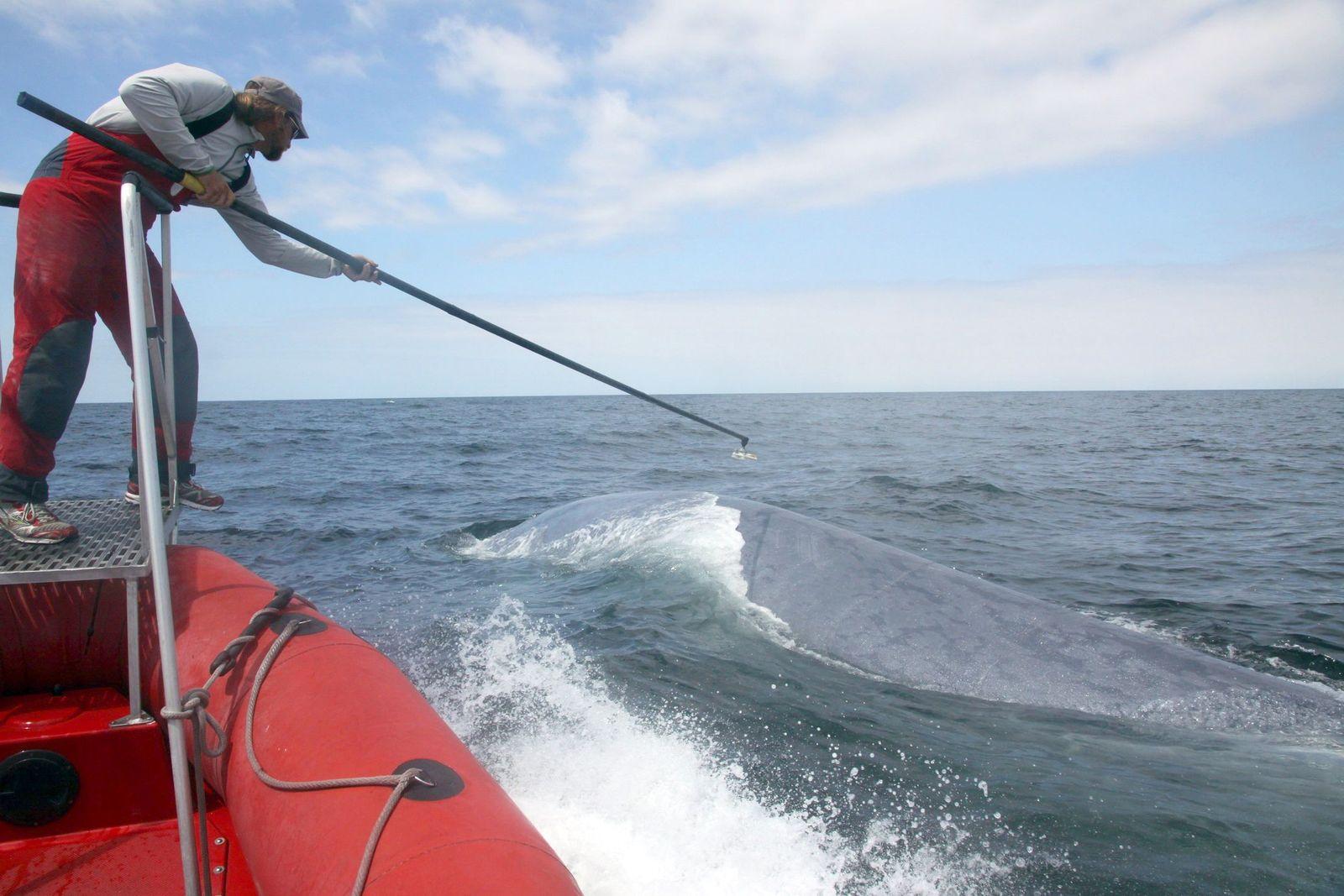 EINMALIGE VERWENDUNG Sonar / Wale