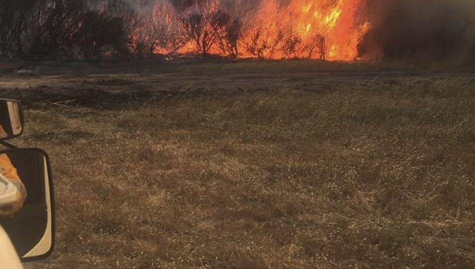 Buschbrand nahe Esperance in Australien: Drei Tote beim Versuch, ein Pferd zu retten