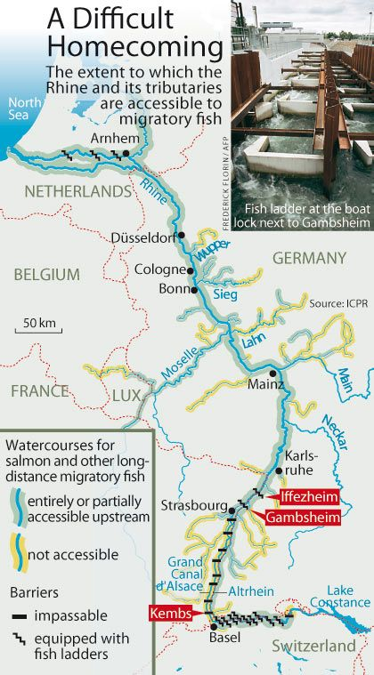The path of salmon up the Rhine.