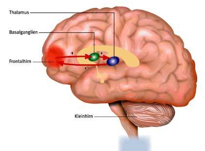 Vorderer Gyrus cinguli: Schlüsselfunktion bei Wahrnehmung von Emotionen