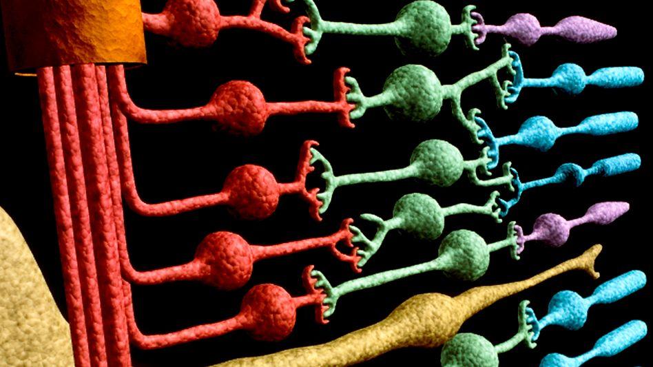 Retinarezeptoren: Umwandlung von Licht in elektronische Impulse