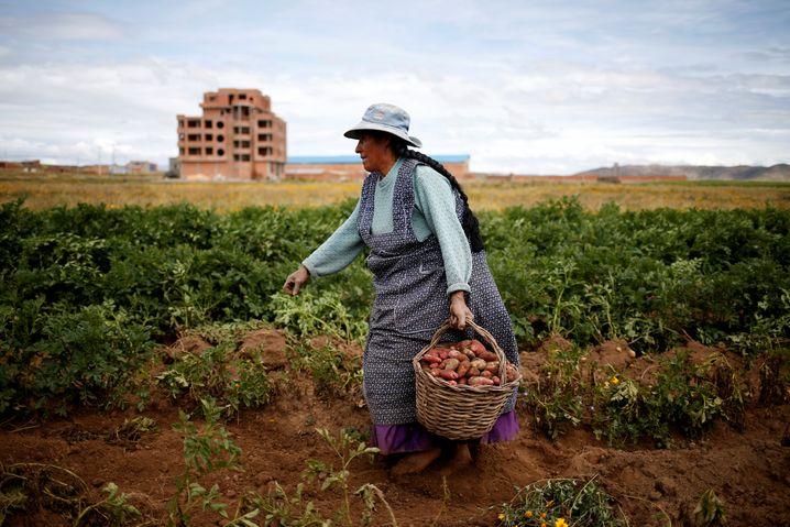 Eine Bäuerin auf dem Land nahe La Paz in Bolivien erntet Kartoffeln