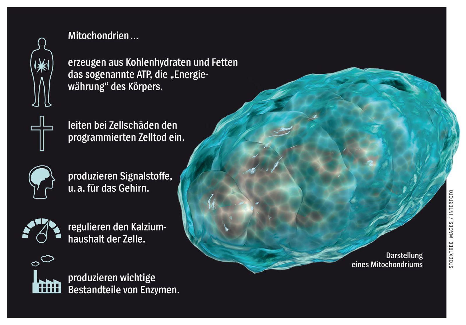 EINMALIGE VERWENDUNG NUR FÜR SPIEGEL Plus SP 37/2017, S.122 Mitochondrien STARTBILD