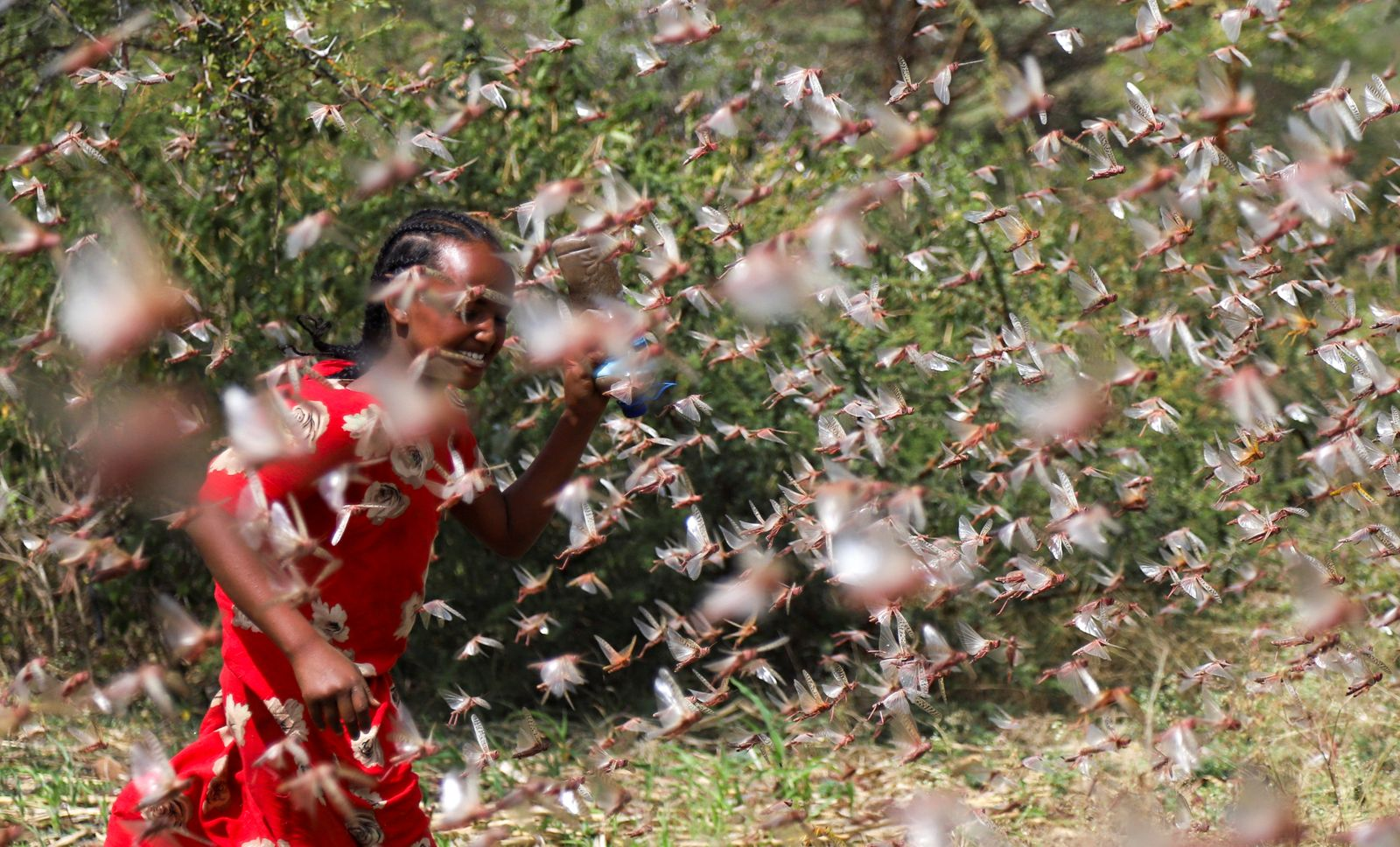 An Ethiopian girl attempts to fend off desert locusts as they fly in a farm on the outskirt of Jijiga in Somali region