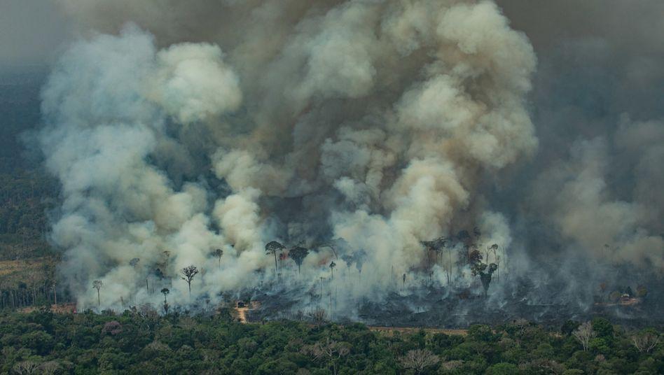 Feuer im Amazonas (Archivbild)
