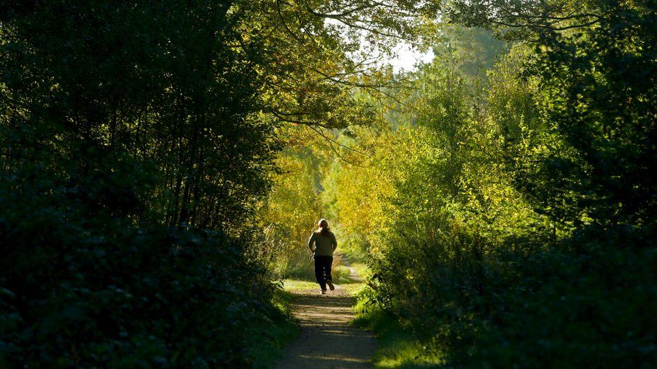 Joggingrunde durch den Wald: Darm wie ein Hooligan
