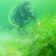 »Seerotz« bedroht das Marmarameer