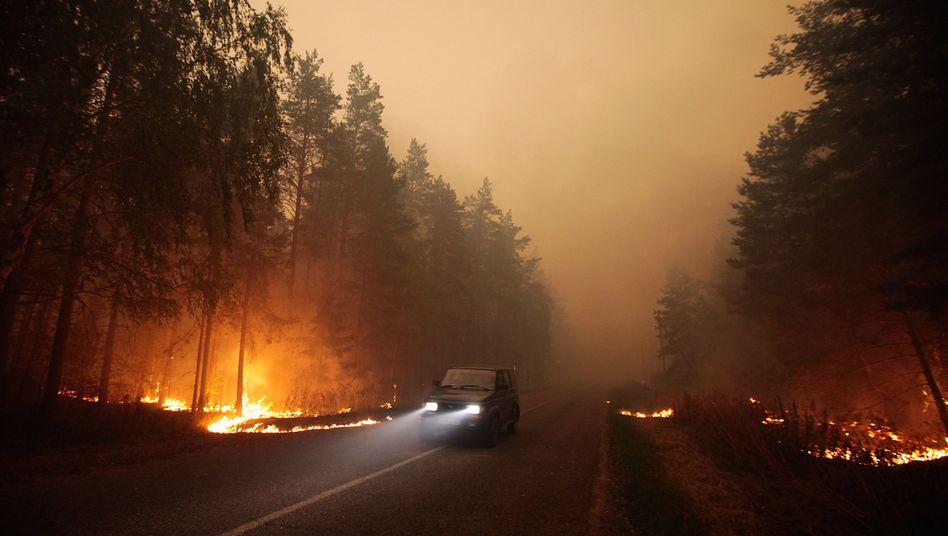 Waldbrand: Kamerasystem soll frühzeitig warnen