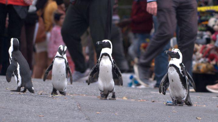 Bild aus der Netflix-Serie »Stadt der Pinguine«