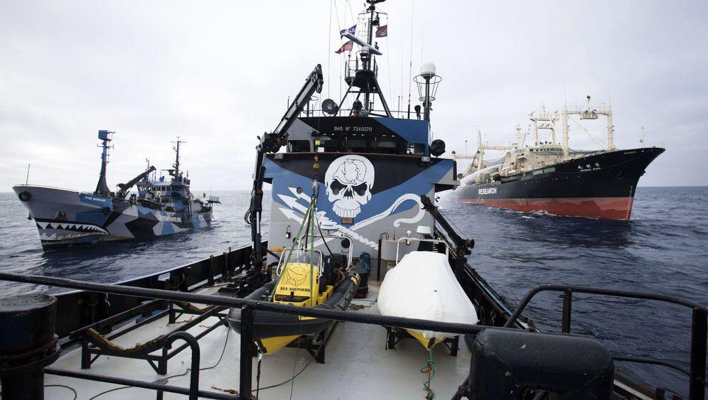 Walfang: Aktivisten im Clinch mit Japans Fangflotte