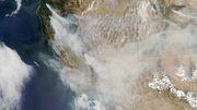 Rekordfläche Wald in Kalifornien verbrannt