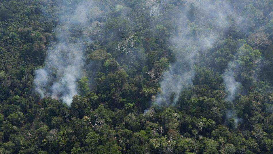 Schwerste Brände seit Jahren: Rauch steigt aus einem Wald in der Nähe des brasilianischen Porto Velho auf