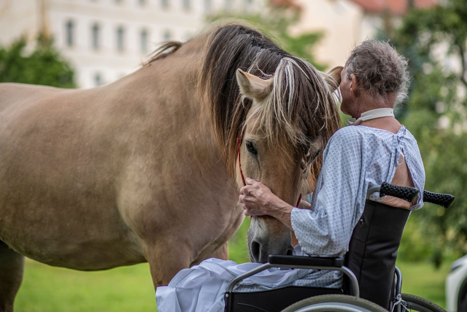 Horse touch therapy for patients in Prague, Czech Republic - 21 Jul 2020