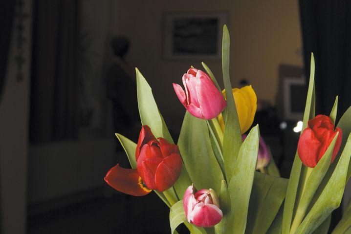 Wenn Blitzeinstellung und Blende unverändert bleiben, die Belichtungszeit aber verkürzt wird (in diesem Fall auf 1/125 s), sinkt der Anteil des Dauerlichts an der Gesamtbelichtung. Die Blumen im Vordergrund bleiben unverändert, der Hintergrund aber versinkt im Dunkel, weil die Lichtmenge des Blitzes quadratisch mit der Entfernung abnimmt