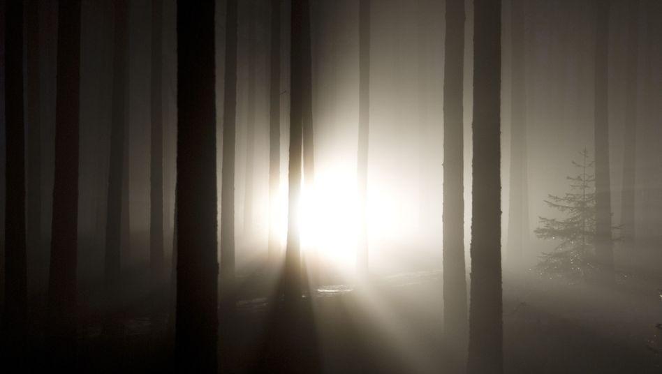 Nahtod-Schilderung: Schreiten ins Licht