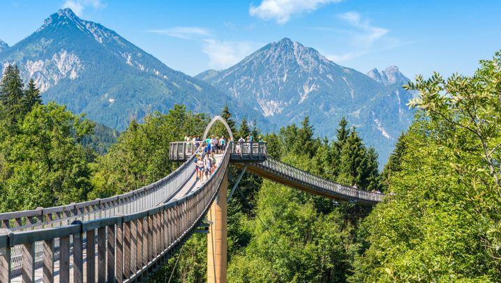 Baumwipfelpfade in Deutschland: Türme, Brücken, Tunnelrutsche