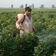 Wie Bayer und BASF in armen Ländern mit Gift abkassieren