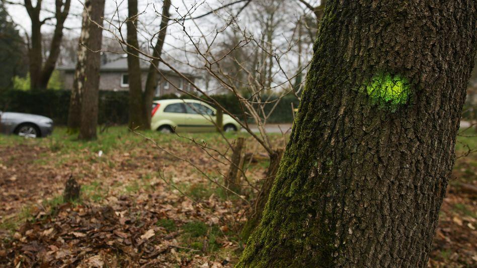 Markierter Baum am Björnsonweg in Blankenese
