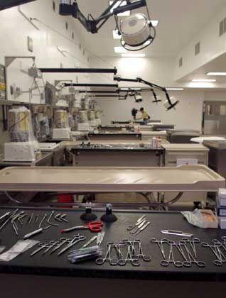 Autopsie / Obduktionsraum: Installationsrohre anstelle der Beine