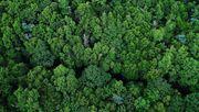 Der Ökoschwindel mit dem Strom aus Holz