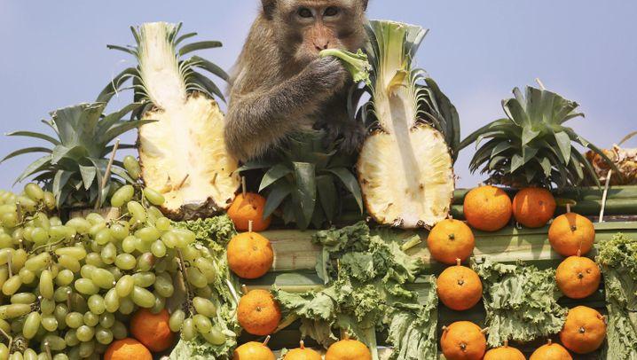 Skurriles Festival in Thailand: Ein Fest für die Affen