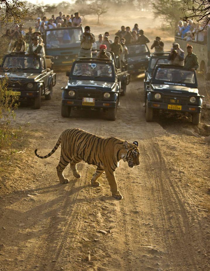 """Touristen auf Safari in Indien: """"Es gibt Menschen, die gern geführt werden"""""""