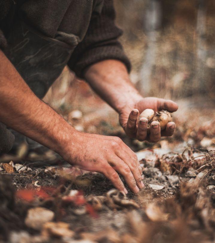 Zenkl und Mutlu essen viel selbst angebaute Kartoffeln und Zwiebeln.