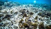 Dem Great Barrier Reef geht es so schlecht wie noch nie