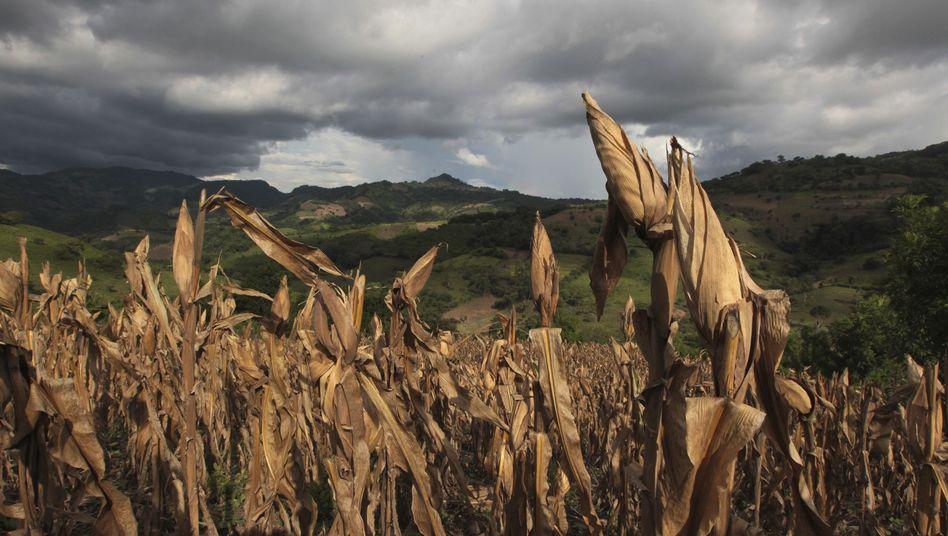"""Vertrocknete Ernte: """"Brauchen alles landwirtschaftlich nutzbare Land, das wir haben"""""""