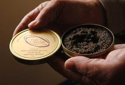 """Kaviardose: """"Mittelfristig wird es weder Stör noch Kaviar geben"""""""