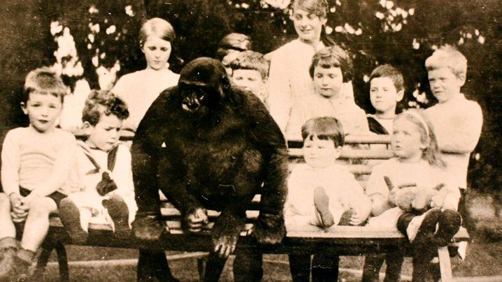 Gefährliche Wohngemeinschaften: Mit Gorilla, Grizzly, Löwe beim Frühstück