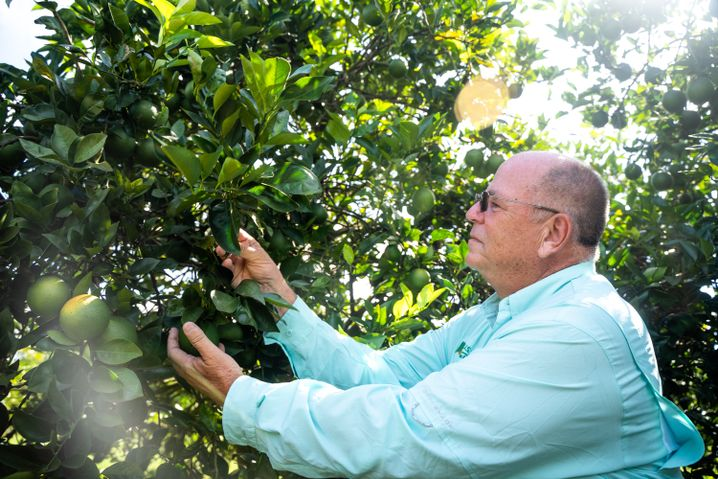 Michael Irey checking out his orange trees.