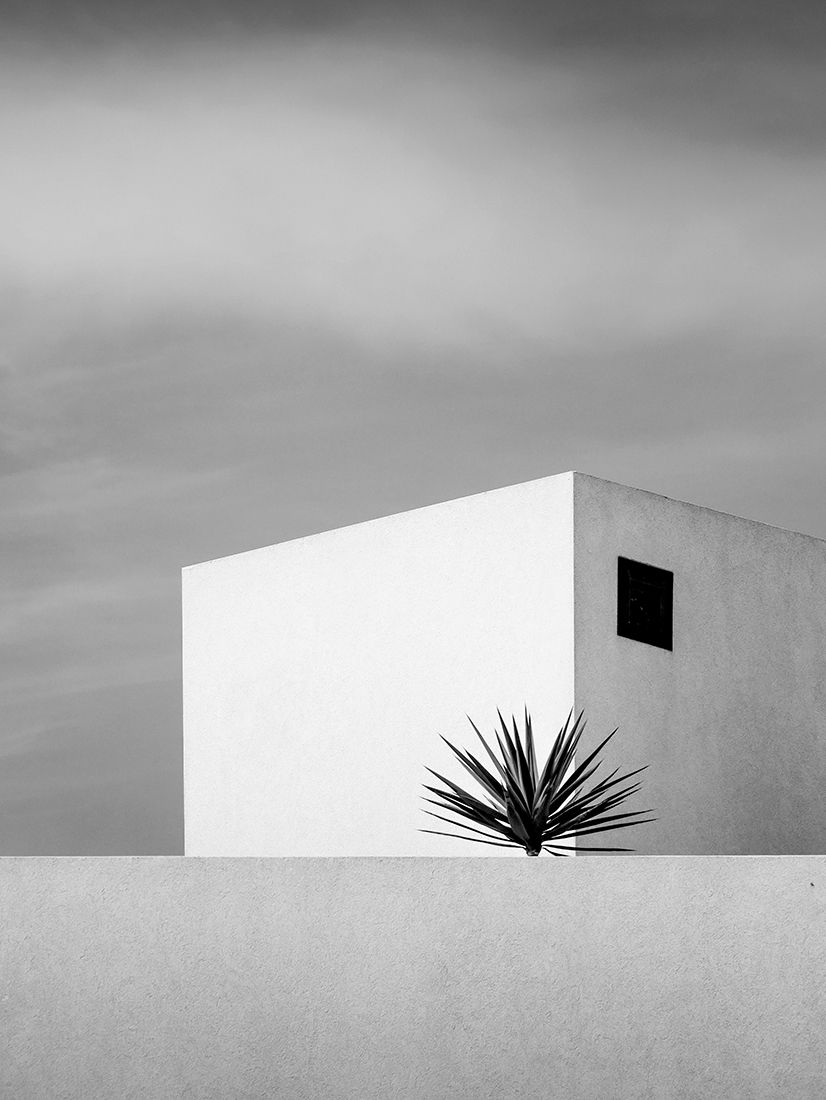 The-Palm-By-Renate-Wasinger-