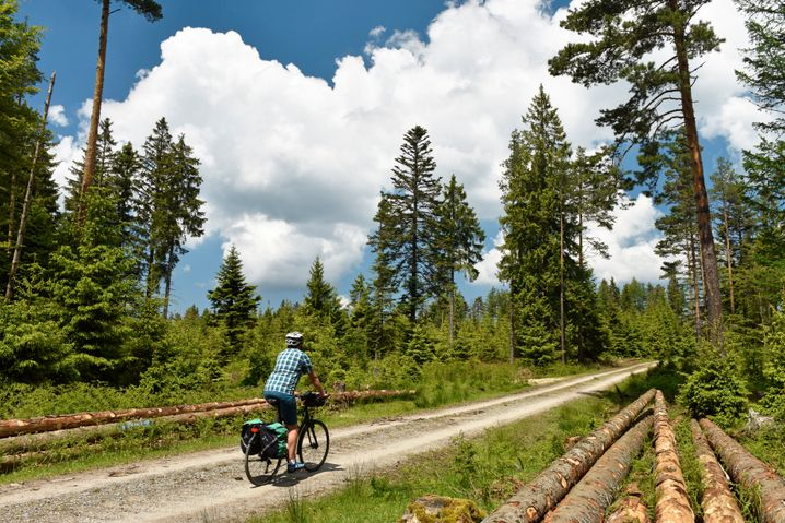 Nordschwarzwald: 16.000 Höhenmeter muss man wollen