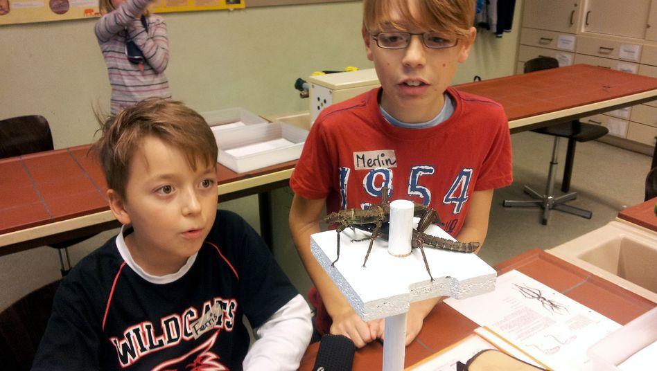Schüler bestaunen eine Riesendornschrecke, die in der Biologiestation lebt.