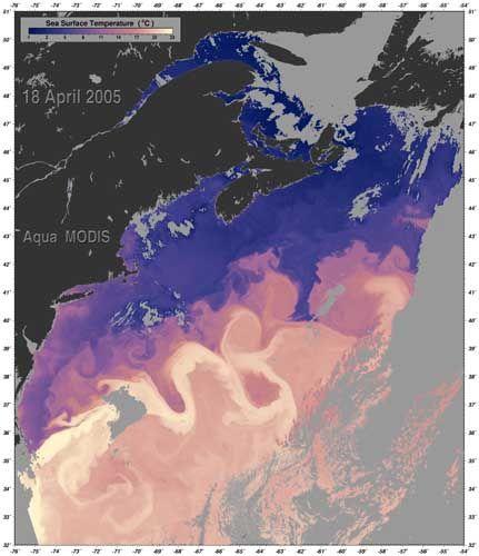 """Golfstrom im Falschfarbenbild (hellere Töne stehen für höhere Temperaturen): """"Wir werden nicht über kurz oder lang in eine Eiszeit rutschen"""""""