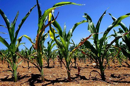 Are biofuels a potential climate killler?