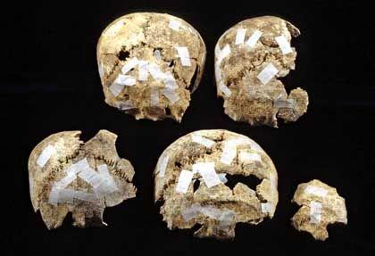 Tote Brüder: Analysen der Schädelreste zeigten, dass vier der sieben Skelette von Brüdern stammen
