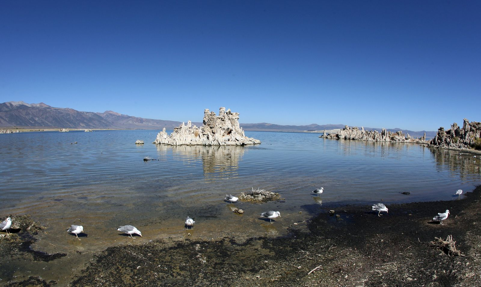 Mono Lake / Arsen-Bakterien