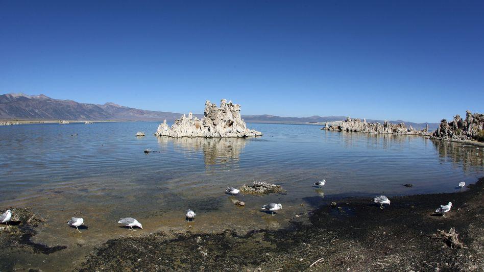 Mono Lake in Kalifornien: Forscher finden Bakterien, die Arsen verarbeiten können