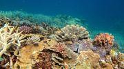 Rettung für das Great Barrier Reef?