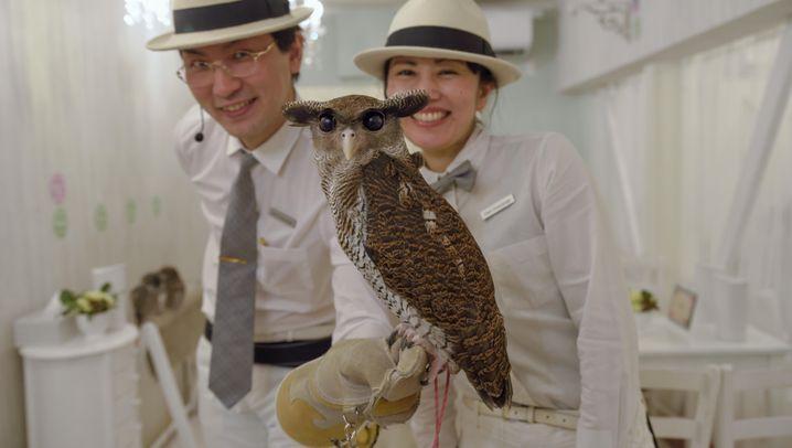 Eulen in Tokio: Vögel-Kuscheln in der Pause