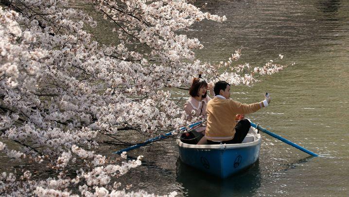 Kirschblüte rund um die Welt: Pretty in Pink