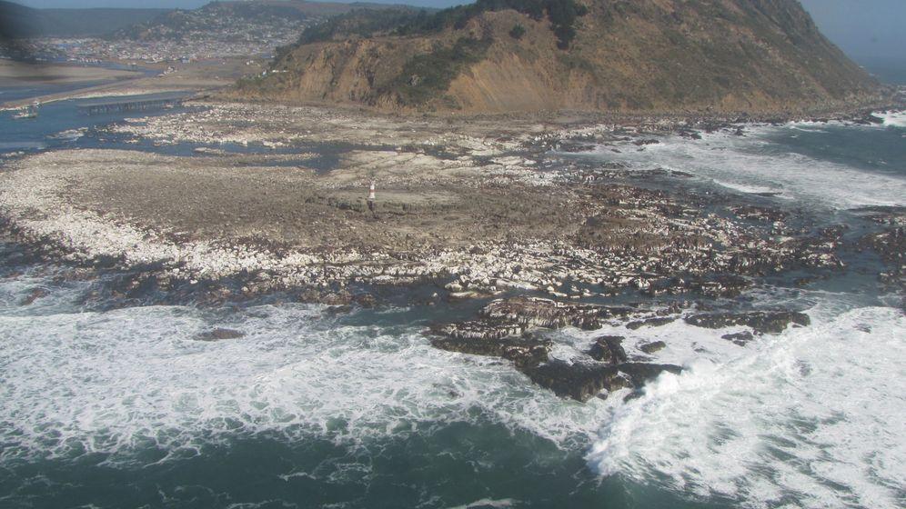 Chile: Erdbeben hebt Küstengebiete aus dem Wasser